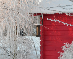 モルモット 冬 温度 外
