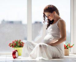 モルモット 妊娠 兆候