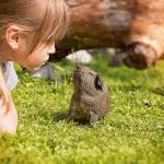 モルモットがおしりの匂いを嗅いだり、飼い主の手をなめる時の気持ちは?