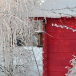 モルモットと冬を過ごすための温度管理について。外での飼育は可能なの?
