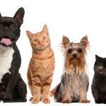 モルモットは犬や猫のようにしつけでトイレを覚える事ができる?それとも覚えない?